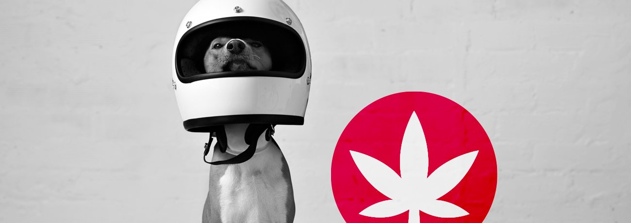 cbd for pets: is it safe south africa - cbd for pets south africa - CBD for Pets: Is It Safe South Africa