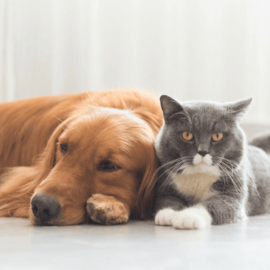 CBD for Pets buy cbd oil online south africa - 6 - Homepage